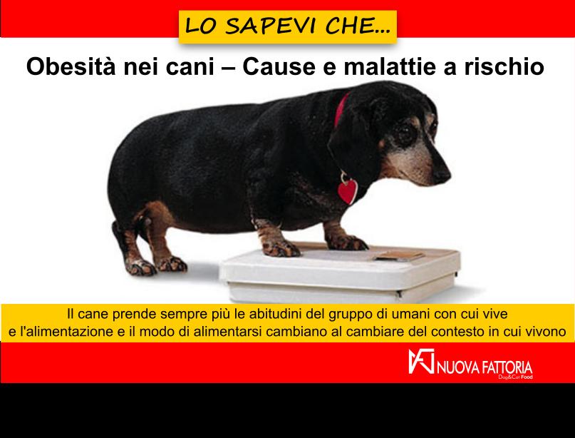 Articolo che tratta di cani obesi